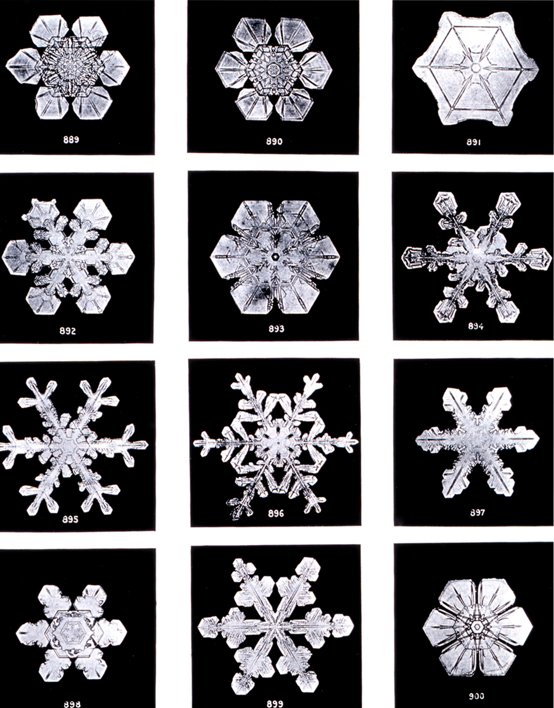 Bentley, Wilson A. Studies among the snow crystals during the winter of 1901-2