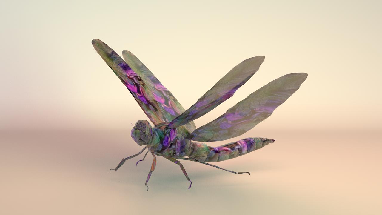 drangonfly 1